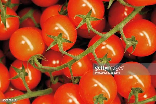 Detail of cherry tomatoes on the vine taken on November 3 2012