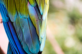 Detail of colorful macaw wing.