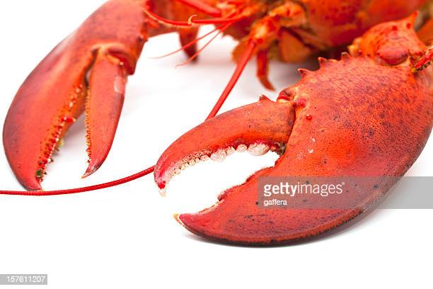 Detail of cooked lobster's claws on a white background
