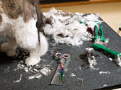 Detail of dog grooming