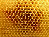 View of honeycomb inside the hive.