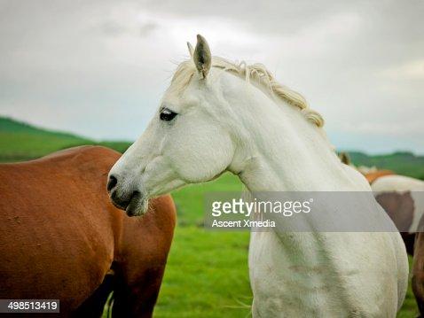 Detail of horses in open range country : Foto de stock