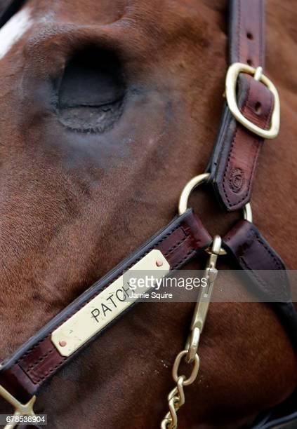 A detail of Kentuckty Derby entrant Patch's missing eye during morning workouts ahead of the 143rd Kentucky Derby at Churchill Downs on May 4 2017 in...