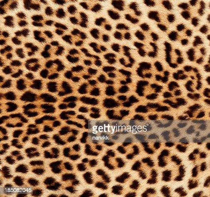 Detail of Leopard Skin