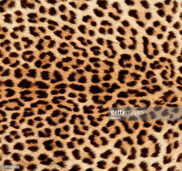 Détail de la peau de léopard