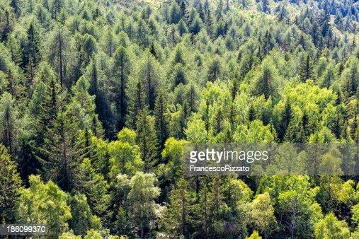 Detail der Mountain Bäume auf den italienischen Alpen im Sommer : Stock-Foto