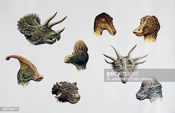 Detail of some dinosaurs heads from left to right and top to bottom Ouranosaurus nigeriensis Troodon formosus Triceratops horridus Styracosaurus...