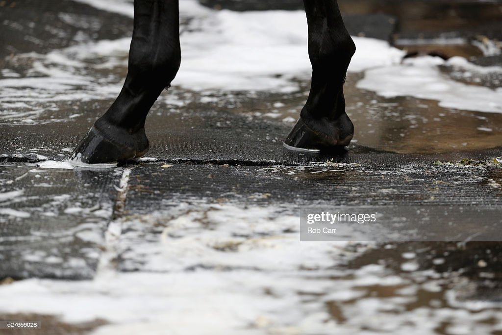 A detail of the feet of Nyquist getting a bath after training on the track for the Kentucky Derby at Churchill Downs on May 03, 2016 in Louisville, Kentucky.