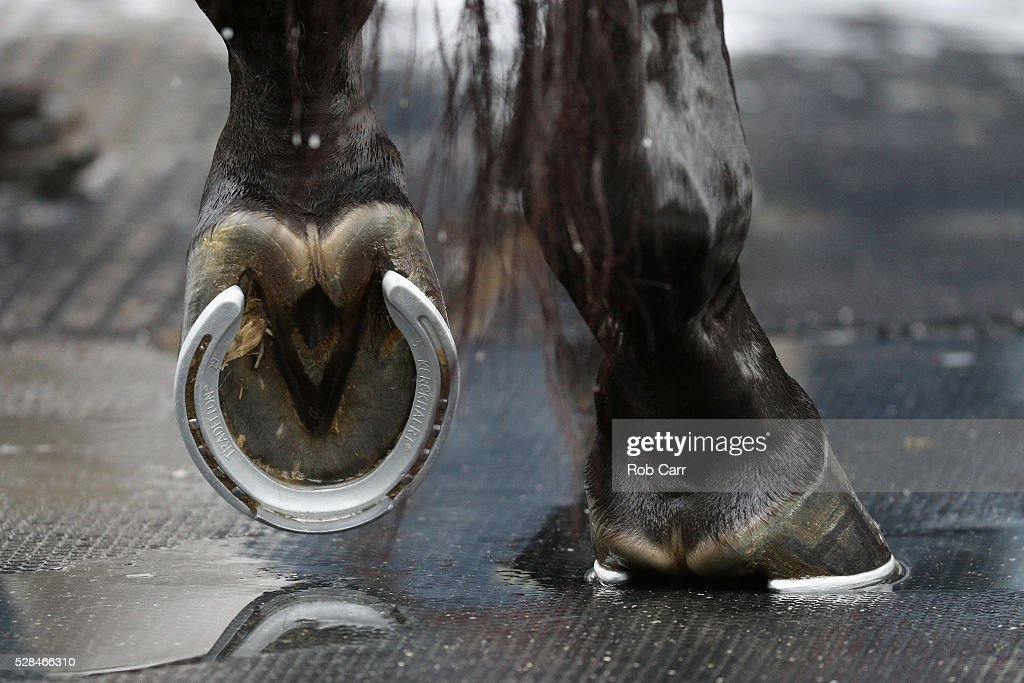 A detail of the hooves of Nyquist while getting a bath following training for the Kentucky Derby at Churchill Downs on May 05, 2016 in Louisville, Kentucky.