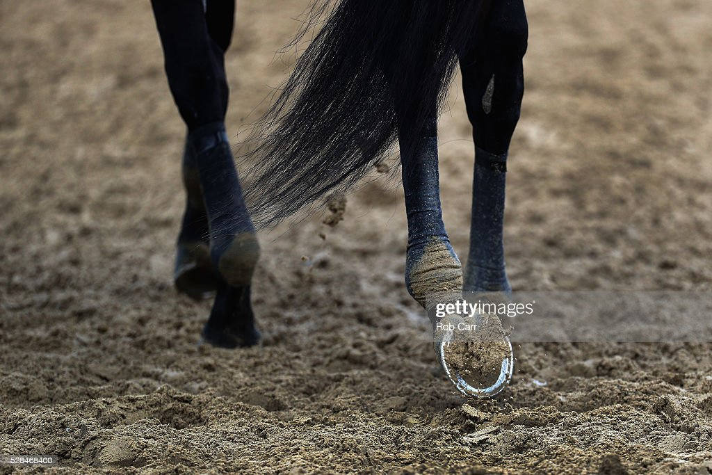 A detail of the hooves of Nyquist while walking on the track following a training session for the Kentucky Derby at Churchill Downs on May 05, 2016 in Louisville, Kentucky.