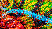 Detail of the particular colored skin of a chameleon.