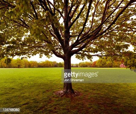 Detail of tree in open field : Stock Photo