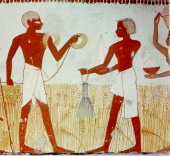 A detail of wall painting in the tomb of Menna showing the harvesting of the wheat Here two surveyors measure the crop before it is cut Egypt Ancient...