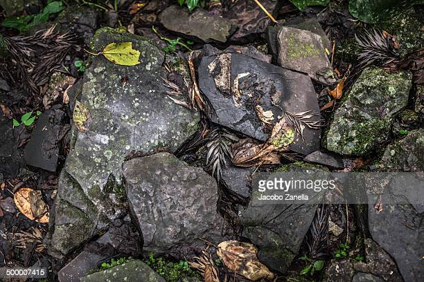 Detail of wet stones in the jungle