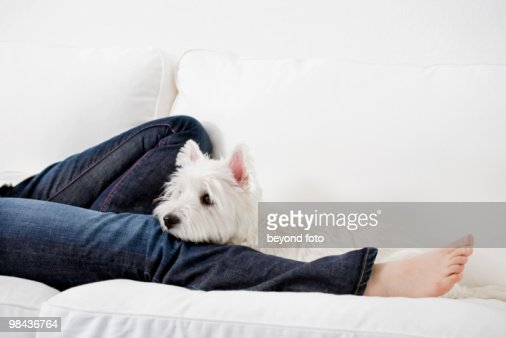 detail of young girl lying on couch with west highland terrier