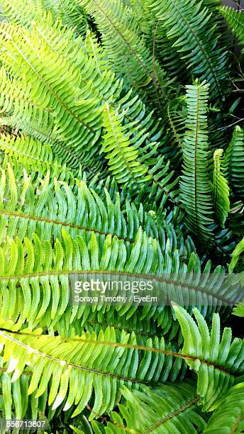 Detail Shot Of Fern Fronds