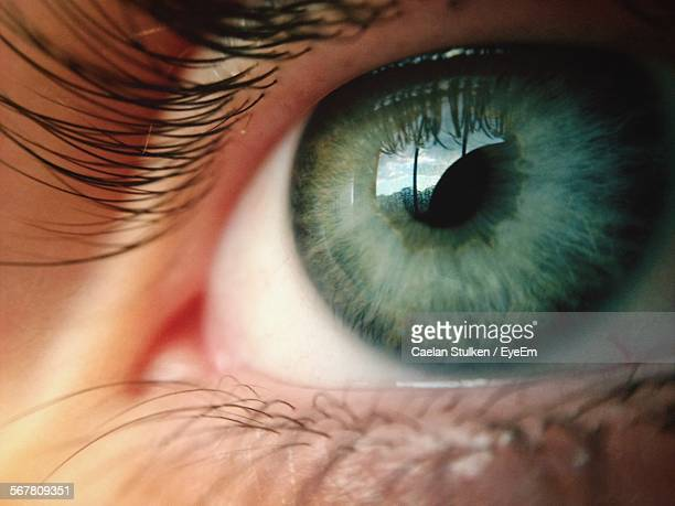 Detail Shot Of Human Eye With Lashes