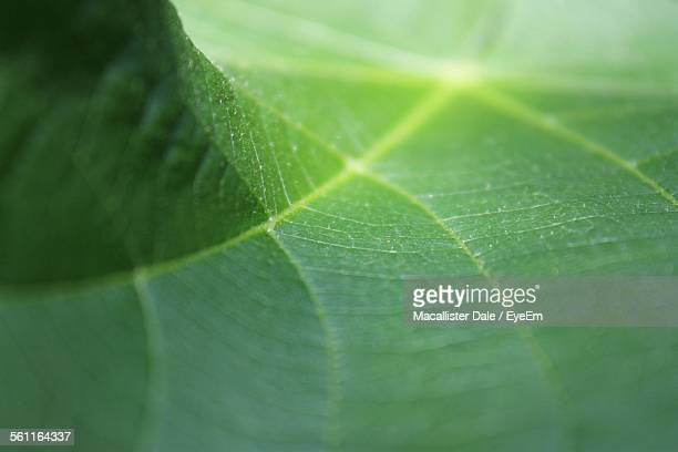 Detail Shot Of Leaf