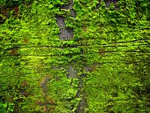 Detail Shot Of Moss On Surface