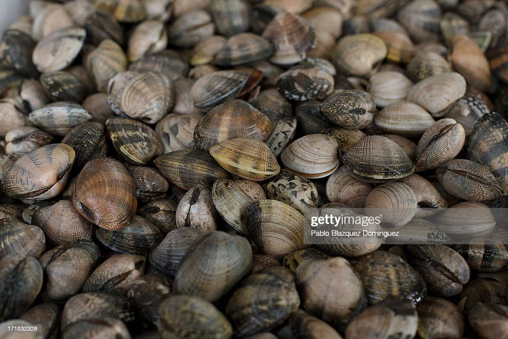 A detail view of shellfish at the fish market in the port on June 21 2013 in Pobra do Caraminal Galicia Spain Traditional fishing is an important...