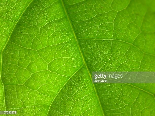 detailed macro green leaf nerfs