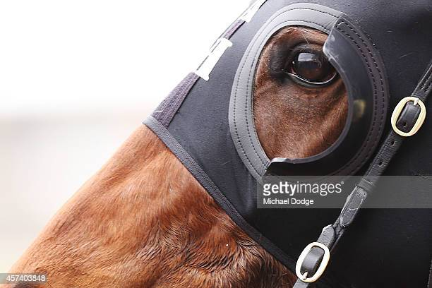 A detailed view of blinkers is seen during Caulfield Cup Day at Caulfield Racecourse on October 18 2014 in Melbourne Australia
