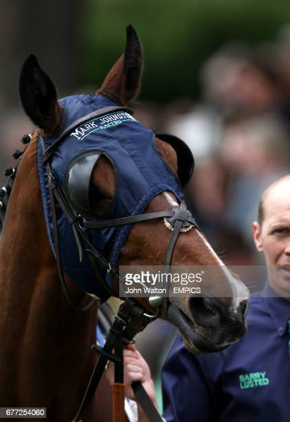 Detailed view of blinkers on horse