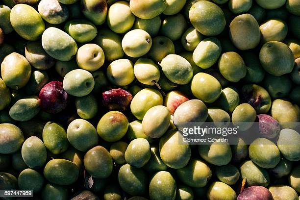 Details of black and green olives - texture