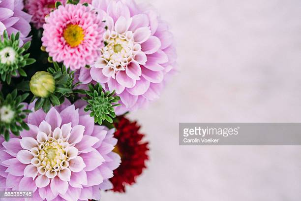Details of dahlias