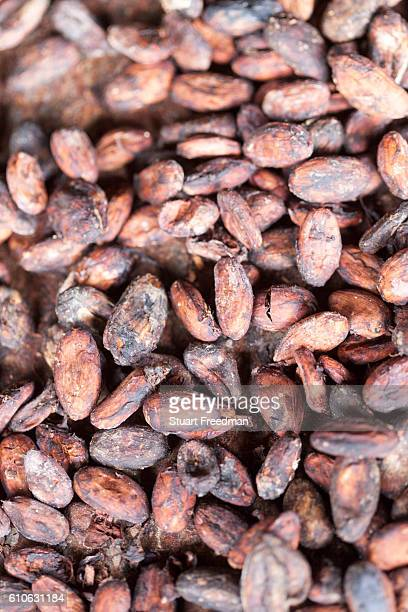 Details of drying cacao beans at the Roca Boa Vista Sao Tome The cacao plant was taken from Brazil to Principe and Sao Tomé for the first time around...