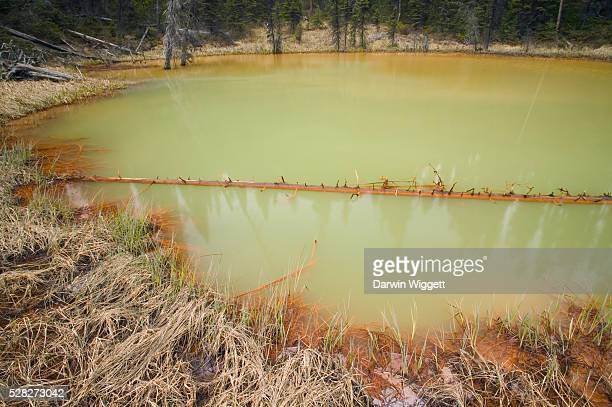 Details Of One Of The Paint Pots In Yoho National Park Bc – Iron-Rich Mineral Springs Bubble Up Through Small Pools, Staining The Earth A Deep Ochre, Canada, British Columbia, Yoho National Park