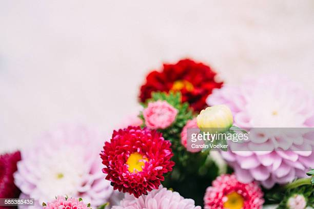 Details of pastel coloured dahlias