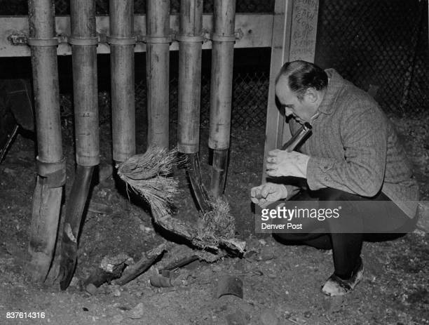 Detective Robert Weyand Examines Damages to Telephone Cables Caused by Explosion Service between downtown Denver and Lakewood Golden and Evergreen...