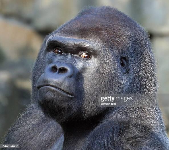 gorilla sports berlin