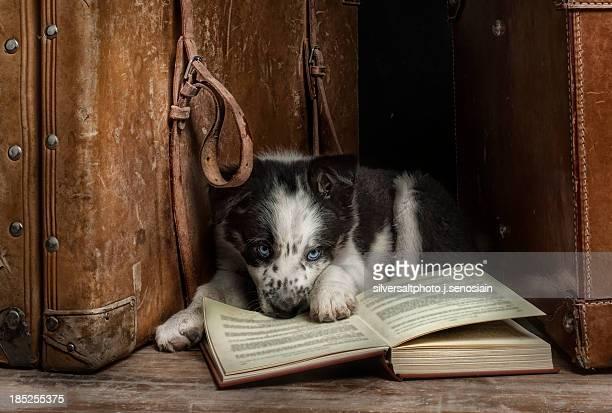 Devorador de libros