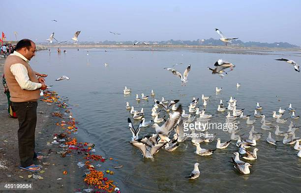 Devotee feeds Sibearian seagulls during sunset at the Sangam the confluence of the rivers Ganges Yamuna and the mythical Saraswathi in Allahabad