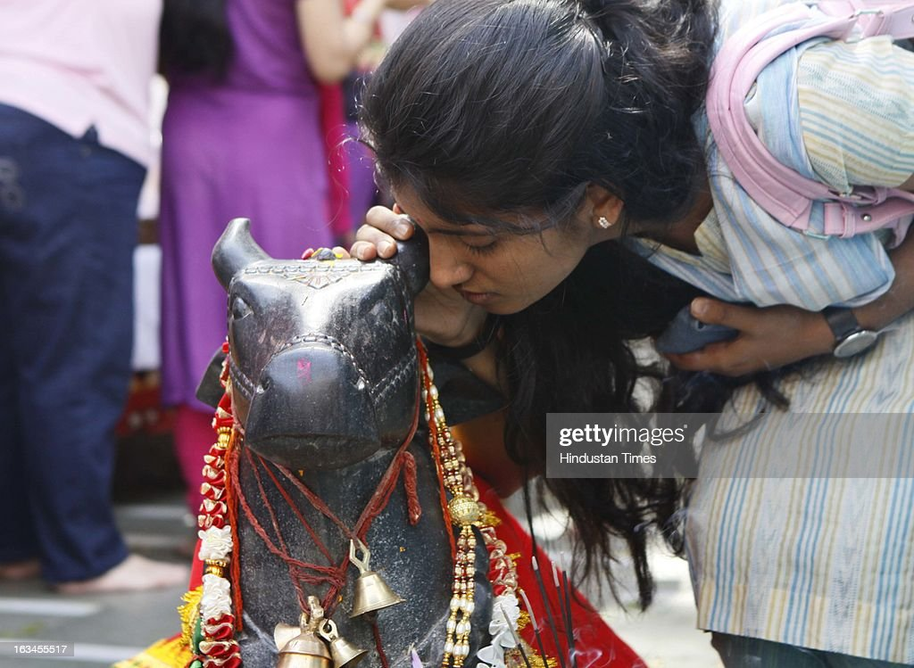 Devotee making wish in the ear of Nandi on occasion of Shivratri Festival on March 10, 2013 in New Delhi, India. Literally meaning great night of Shiva or the night of Shiva, Maha Shivaratri is celebrated every year on the 13th night/14th day of the Maagha or Phalguna month of the Hindu calendar. According to Hindu legends this is day of Samundra Manthan as well as day of Marriage of Lord Shiva to Devi Parvati.