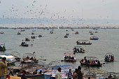 Devotees enjoy boating as siberian sea gulls flying at Sangam during one month long Magh mela festival