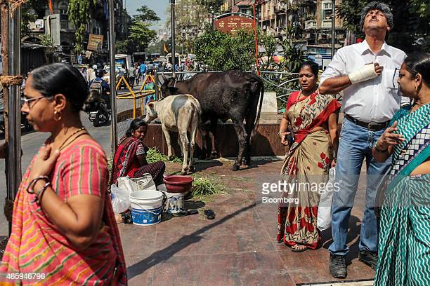 Devotees pray and feed cows outside a Hindu temple in Mumbai India on Wednesday March 11 2015 The government of the state of Maharashtra last week...