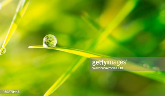 Dew drop on blade of grass : 스톡 사진