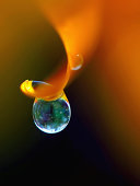 Dew drop on orange flower petal