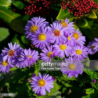 Dew droplets on flowers : Stock Photo