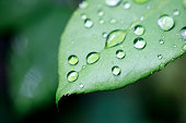 water drops on the green leaf