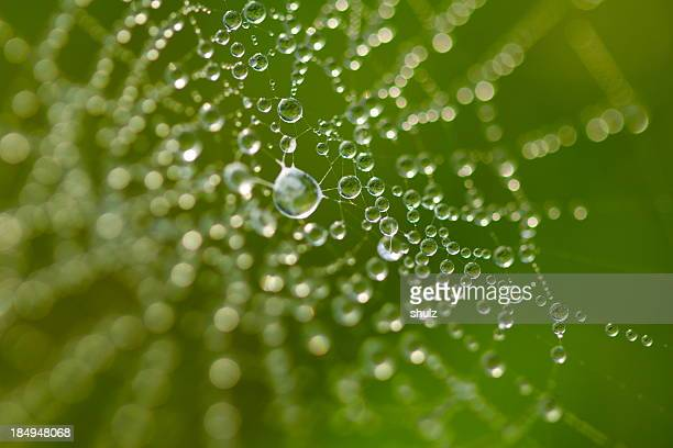 Dew drops on a web