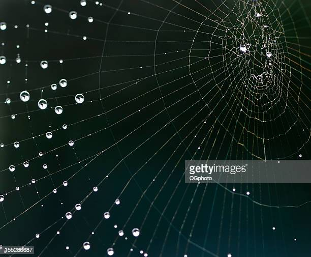 Dew drops on shimmering spider web