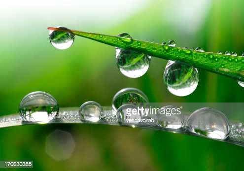 Dew drops : Stock Photo