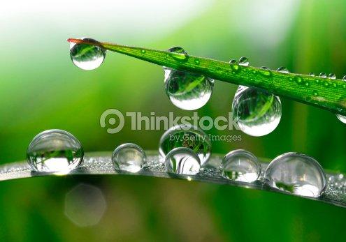 Dew drops : Stock Photo