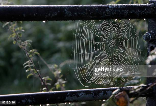 Dew gathers on a spider's web as early morning mist lingers over the City of Bath on October 9 2008 in Somerset England Many parts of the country are...