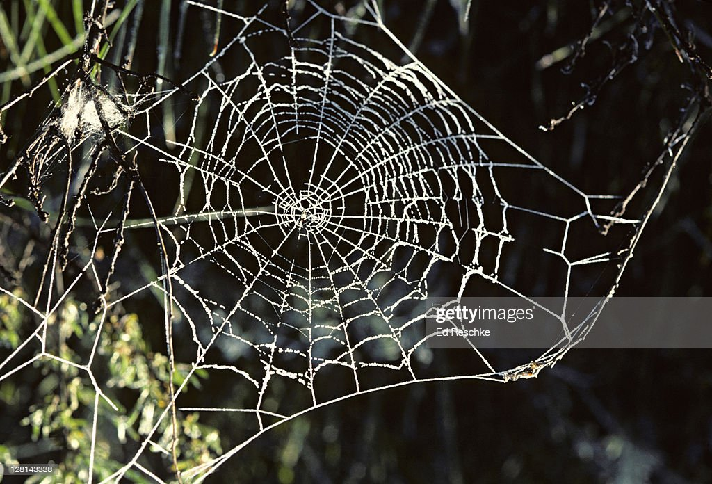 Dew-covered spider web : Stock Photo
