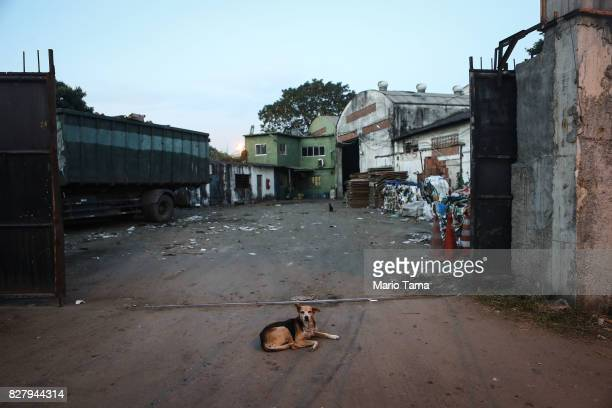 A dg sits in front of a business in the Caju neighbourhood which houses two forlorn shipyards along Guanabara Bay on August 8 2017 in Rio de Janeiro...